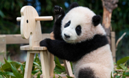 Panda World's thumbnail image